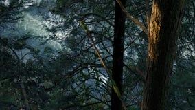 Árvores acima do rio na luz solar da noite filme