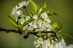 Árvores agradáveis durante a florescência na primavera fotografia de stock