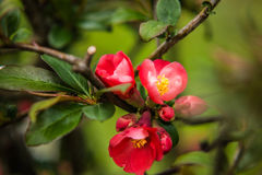 Árvores agradáveis durante a florescência na primavera fotos de stock royalty free