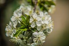 Árvores agradáveis durante a florescência na primavera foto de stock royalty free