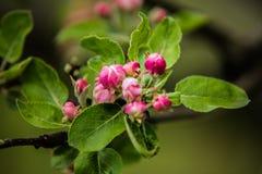 Árvores agradáveis durante a florescência na primavera imagem de stock
