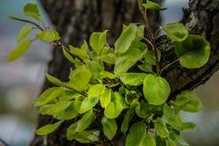 Árvores agradáveis durante a florescência na primavera fotos de stock