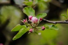 Árvores agradáveis durante a florescência na primavera foto de stock