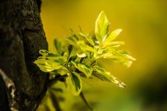 Árvores agradáveis durante a florescência na primavera imagens de stock