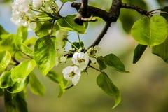 Árvores agradáveis durante a florescência na primavera imagem de stock royalty free