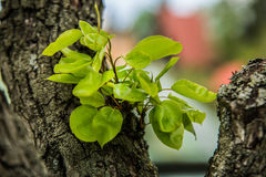 Árvores agradáveis durante a florescência na primavera imagens de stock royalty free