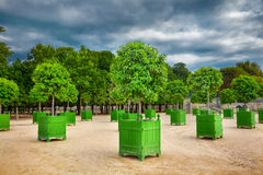 Árvores alaranjadas Imagem de Stock