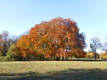 Árvores alaranjadas no parque Foto de Stock
