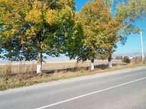 Árvores alinhadas Foto de Stock