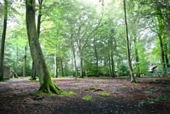 Árvores altas imagem de stock royalty free