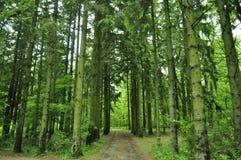 Árvores altas Foto de Stock