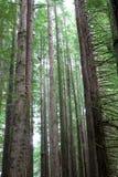 Árvores altas imagens de stock