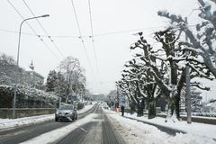 Árvores altas ao longo da estrada Fotos de Stock Royalty Free