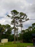 Árvores altas no céu fotografia de stock