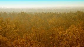 Árvores amarelas Imagens de Stock Royalty Free