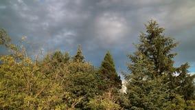 Árvores amarelas Imagem de Stock