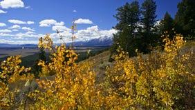 Árvores amarelas de Aspen acima do vale Imagens de Stock Royalty Free