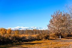 Árvores amarelas do outono fotografia de stock royalty free