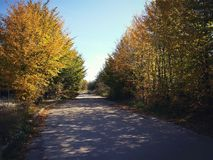 Árvores amarelas do outono sobre a estrada Imagem de Stock