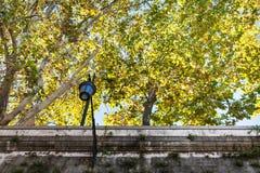 Árvores amarelas do sicômoro sobre paredes do rio de Tibre Imagem de Stock