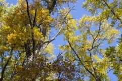 Árvores amarelas e alaranjadas brilhantes da queda do outono em um parque foliage foto de stock royalty free