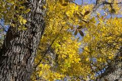 Árvores amarelas e alaranjadas brilhantes da queda do outono em um parque foliage imagens de stock royalty free