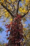 Árvores amarelas e alaranjadas brilhantes da queda do outono em um parque foliage fotografia de stock