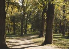 Árvores amarelas e alaranjadas brilhantes da queda do outono em um parque foliage foto de stock