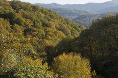 Árvores amarelas e alaranjadas brilhantes da queda do outono em um parque foliage imagem de stock royalty free