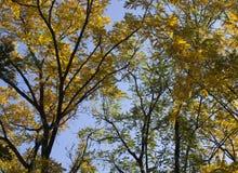 Árvores amarelas e alaranjadas brilhantes da queda do outono em um parque foliage fotos de stock royalty free
