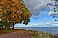 Árvores amarelas e vermelhas das folhas pelo mar fotografia de stock royalty free