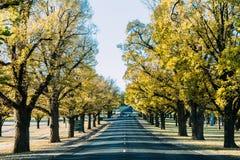Árvores amarelas no campo Foto de Stock