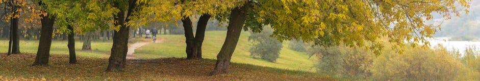 Árvores amarelas no outono pelo rio imagens de stock royalty free