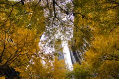 Árvores amarelas Zuccotti Park fotografia de stock royalty free