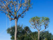 Árvores amarradas imagem de stock
