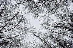 Árvores ao céu Imagem de Stock Royalty Free