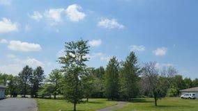Árvores ao lado de uma maneira da caminhada Fotografia de Stock