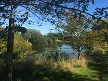 Árvores ao lado do lago perto de Coggeshall em Essex Imagem de Stock Royalty Free