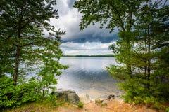 Árvores ao longo da costa do lago Massabesic, em Hampshi castanho-aloirado, novo imagem de stock royalty free