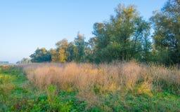 Árvores ao longo de um campo no nascer do sol na queda Fotos de Stock Royalty Free