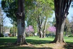 Árvores ao longo de um trajeto do acordo no coração de madeiras de Laguna, Califórnia Imagem de Stock