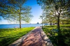 Árvores ao longo de uma passagem no parque de margem do cantão, em Baltimore, M foto de stock