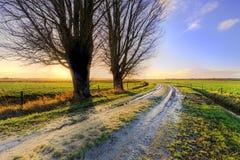 Árvores ao longo de uma pista no por do sol na Holanda Foto de Stock