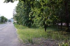 Árvores ao longo de uma rua da cidade fotos de stock royalty free