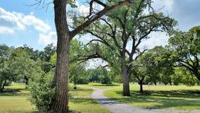 Árvores ao longo do caminho Fotos de Stock Royalty Free