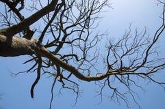 Árvores após o incêndio Fotografia de Stock Royalty Free