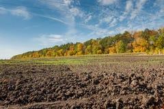 Árvores aradas do campo e do outono Imagens de Stock Royalty Free