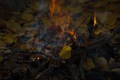 Árvores ardentes da fogueira e leavs amarelos no outono imagens de stock royalty free