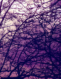 Árvores assombradas Imagens de Stock