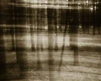 Árvores assustadores Imagens de Stock Royalty Free
